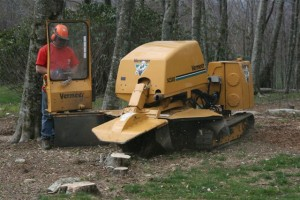 p-stump-removal-01